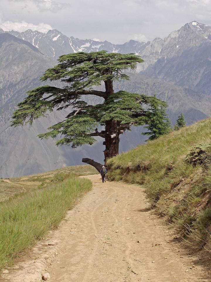 Rumber Valley - Chitral Goi NP Trek - Day 3
