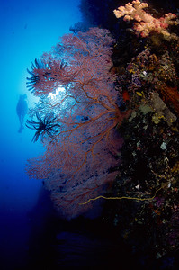 Palau in Micronesia