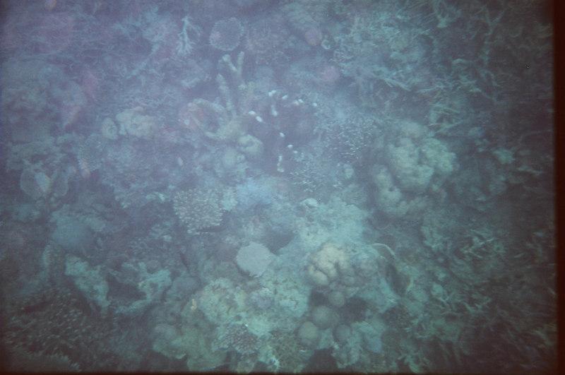 corals at Siete Pecados