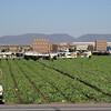 Yuma - harvesting the crops