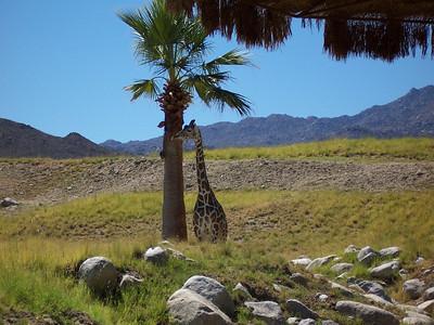 Palm Springs, Calif  Sept '04