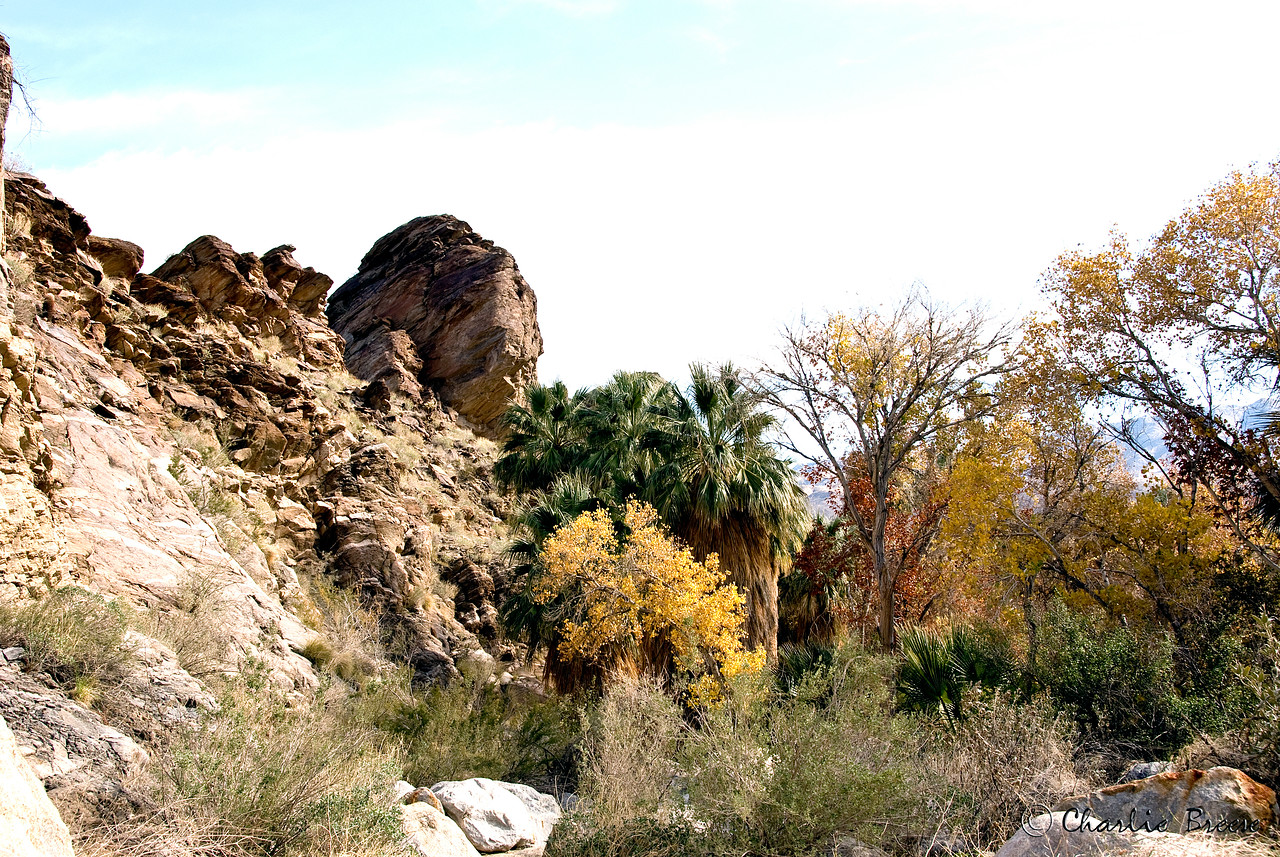 Entrance to Palm Canyon