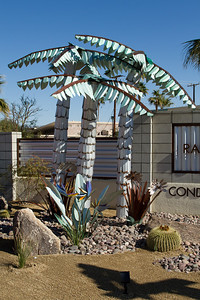 Drought tolerant palms in Palm Springs