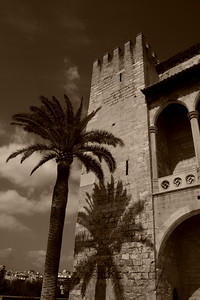 Almudaina with Palm, Palma de Mallorca