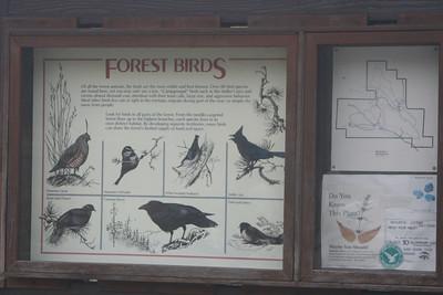 4/8/07 Doane Pond, Palomar Mountain State Park, N. San Diego County, CA