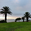 Palm trees facing the Pacific Ocean at Rancho Palos Verdes, California.