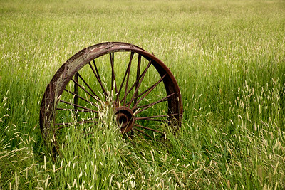 Farming wheel from the old days
