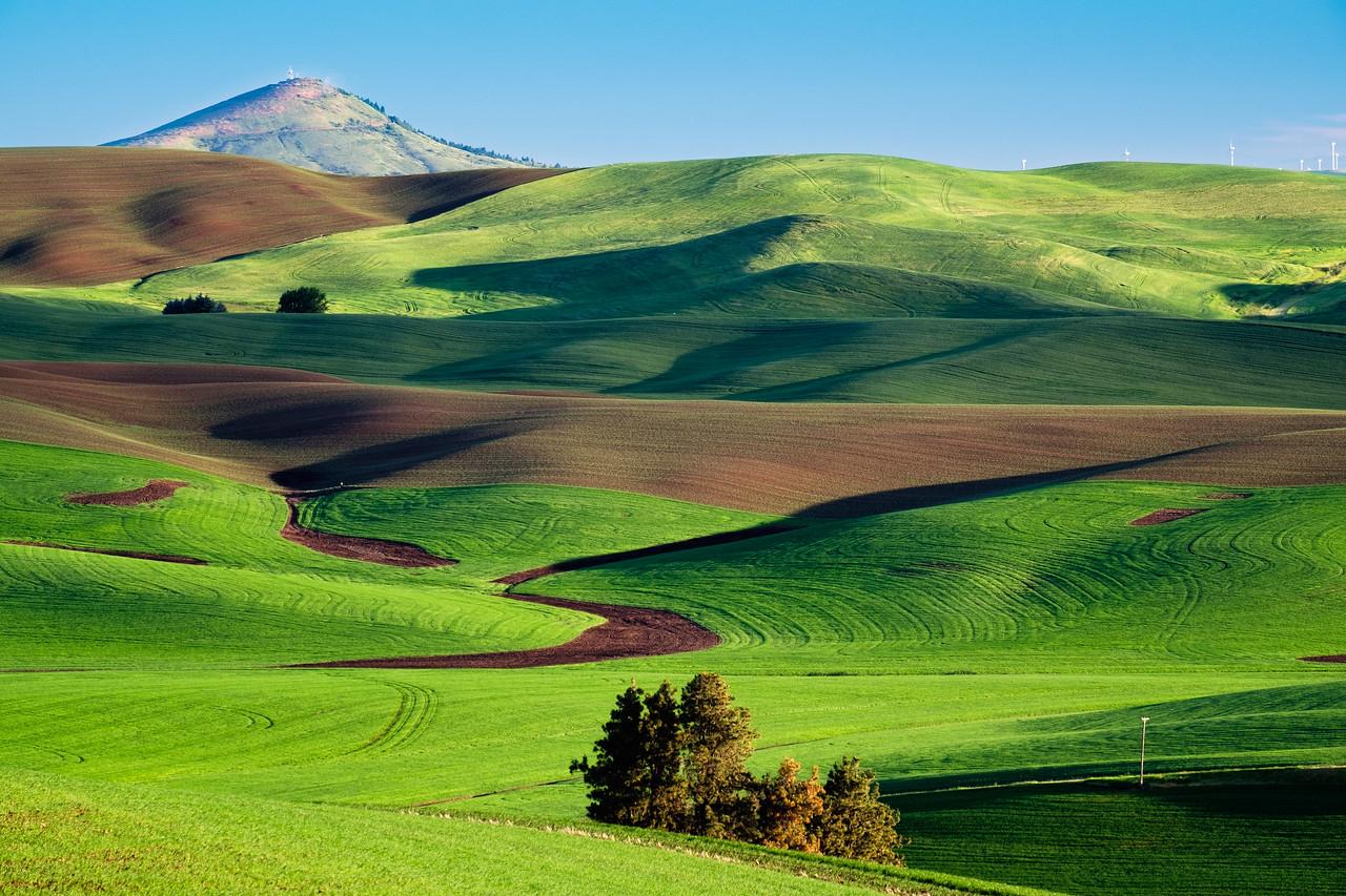Farmfields below Kamiak Butte