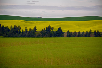 The yellow field is either Canola or Mustard