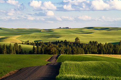 Palouse - Washington