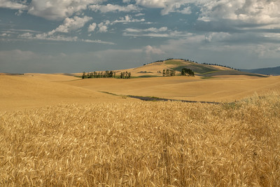 Palouse, Washington State, US -0803