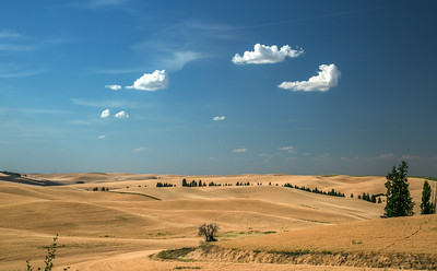 Palouse, Washington State, US -9563