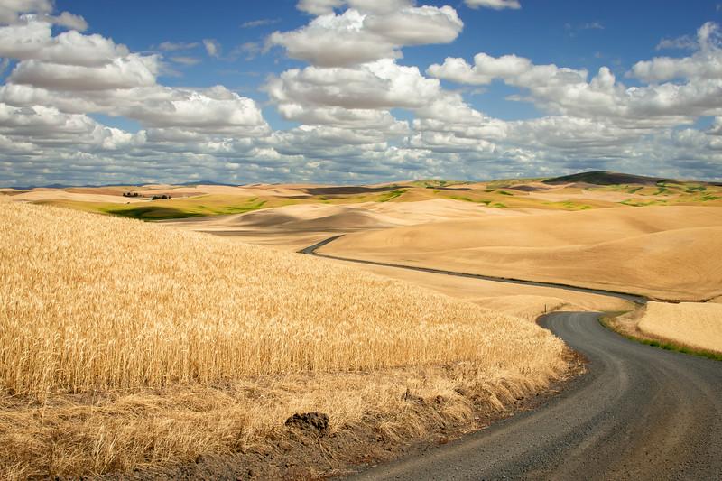 Rolling Wheat Fields with Cherub Clouds