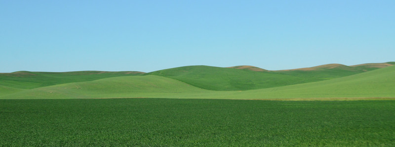 Palouse Abstract I