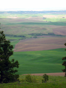 Palouse hills from Kamiak Butte