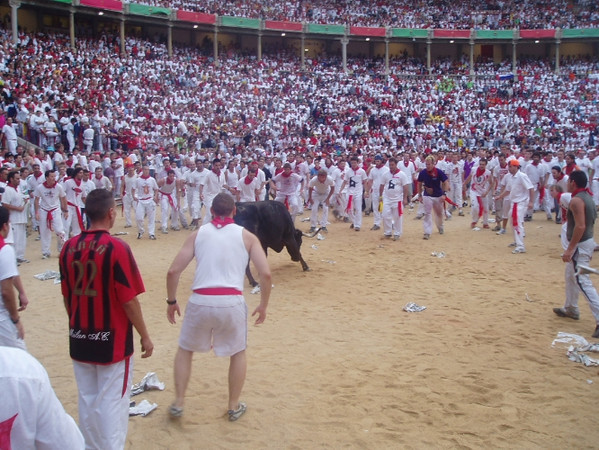 Joey  - running with the bulls
