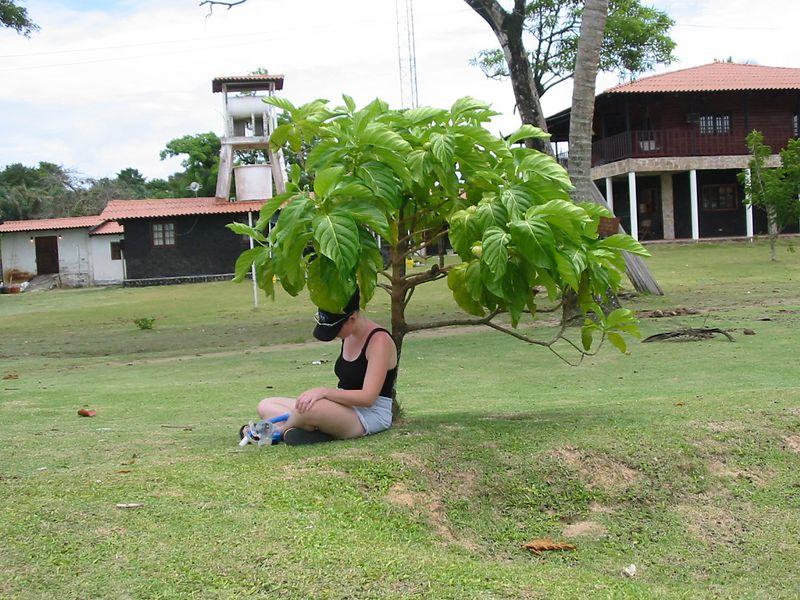 Joanna under noni tree