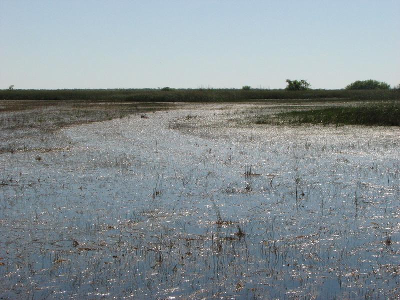 tiretarcks of a swamp buggy