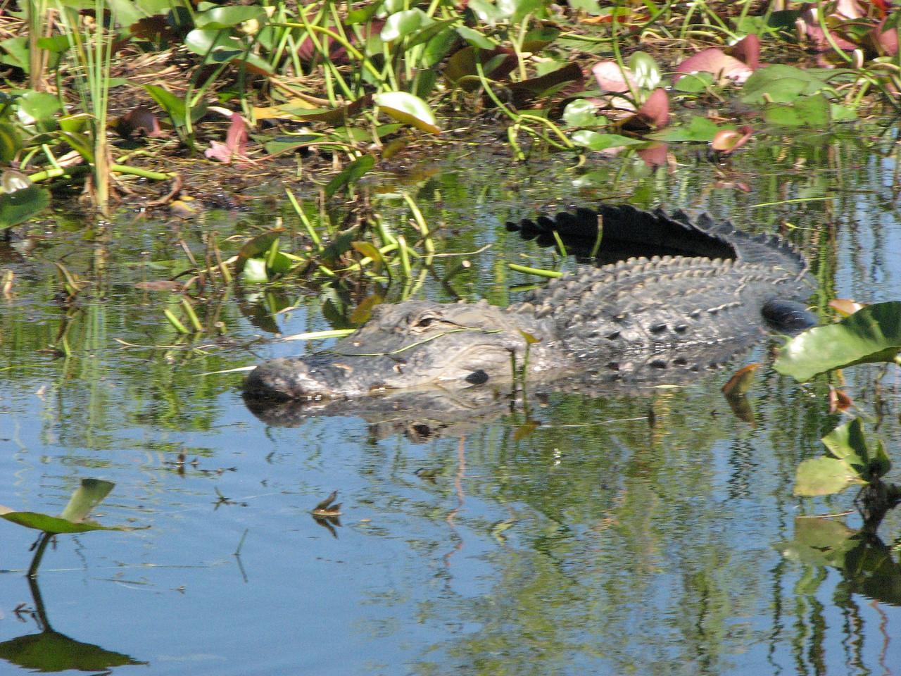 More Gators