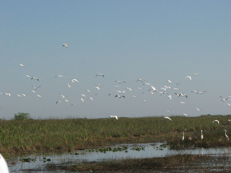 Cranes from the Airboat