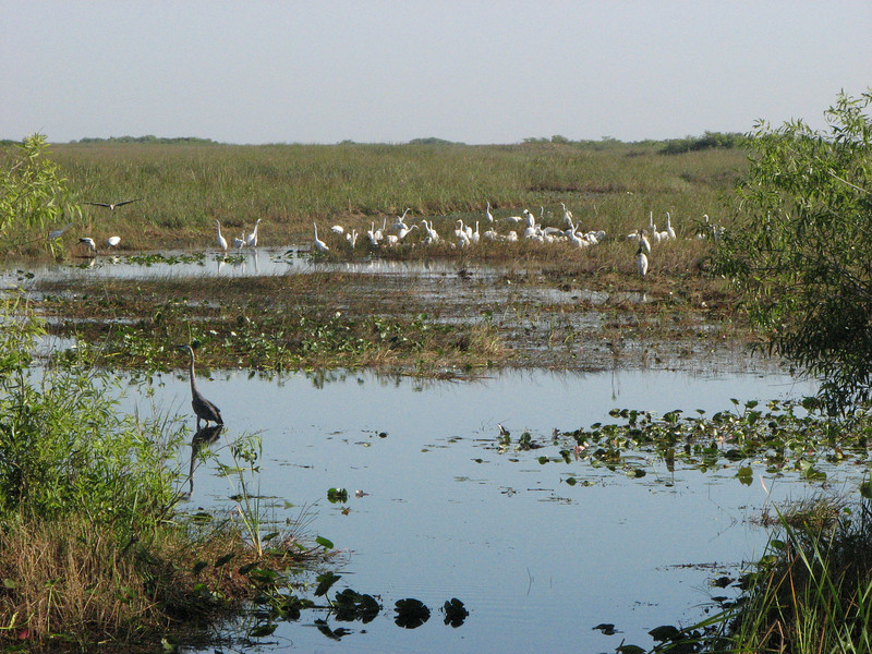 Everglades Tour - From the bus