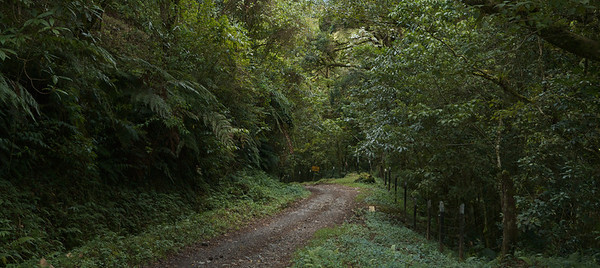 Quetzel Road. Panama September, 2103