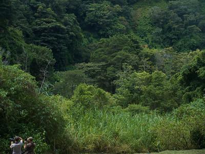 Quetzel Road. Panama September, 2103  birding photographers at work.