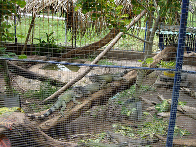 At the rest stop there was a cage of Iguana.  Basically vegetarian but watch out for those long nails.  (My sister has 2 of these in her living room in Las Vegas).  This pictures for her.