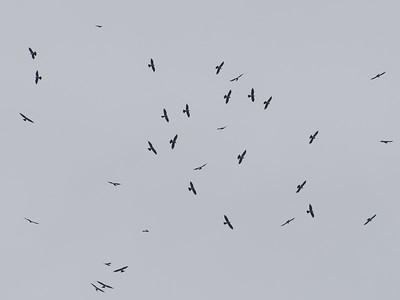 Panama Birding trip - March 2013