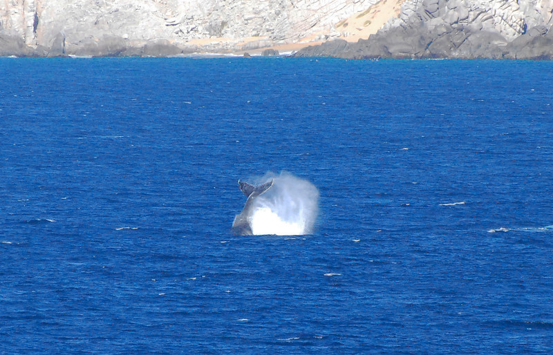 Whales off Cabo