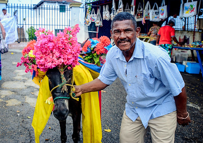 Donkey with flowers...take my photo for a dollar.