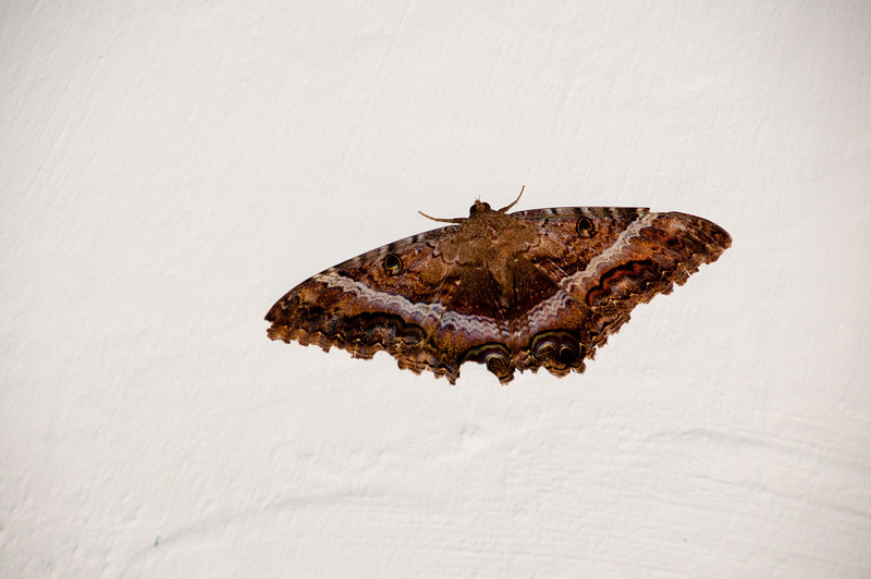 • Cartagena, Colombia<br /> • Butterfly on the wall of the Navy Museum