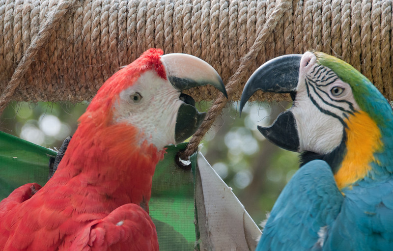 • Cartagena, Colombia<br /> • Park just outside the tourist information building we saw Macaw Parrots
