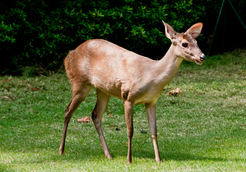• Cartagena, Colombia<br /> • Park just outside the tourist information building weI saw deer