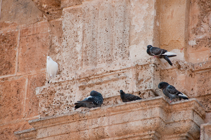 • Cartagena, Colombia<br /> • Doves hanging around  Church of Saint Peter Claver