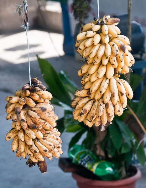 • Costa Rica<br /> • Guess what they are bananas