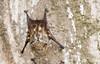 • Costa Rica<br /> • Vampire Bat
