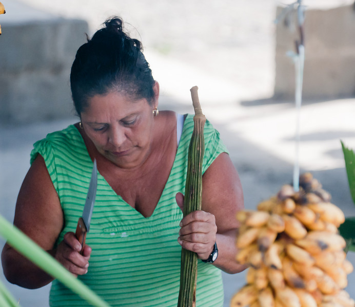 • Costa Rica<br /> • A local cutting the bananas apart