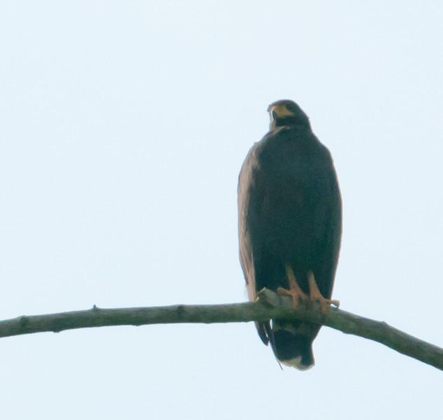 • Costa Rica<br /> • Black Hawk