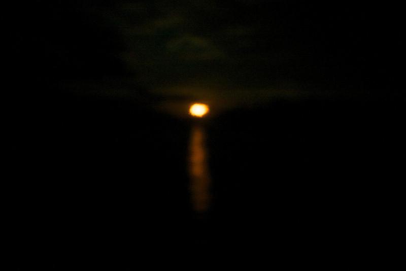 Sea Lion: Moon setting