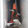 Sea Lion: Brown Booby behind life vest lockers on second deck