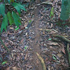 Caletas Reserve: Leafcutter Ant trail
