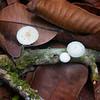 Caletas Reserve: White mushrooms