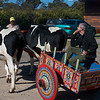 Monteverde: Max in carreta, traditional Costa Rican ox cart, at Don Juan Coffee Tour