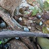 Granito de Oro: Hermit Crabs on tree roots