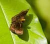 butterflies_Panama002
