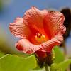Flowers_Panama021