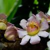 Flowers_Panama005