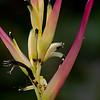 Flowers_Panama002
