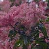 Flowers_Panama004